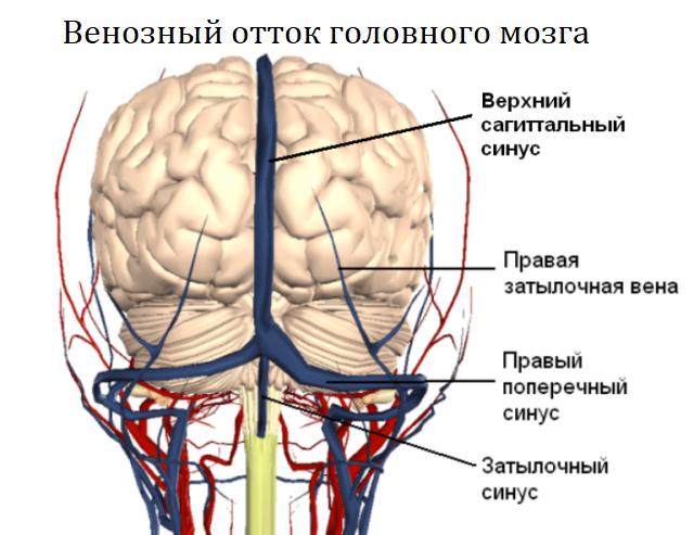 Венозный отток головного мозга
