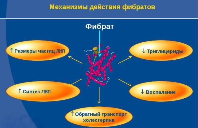 Механизм действия фибартов