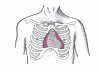 конфигурация сердца